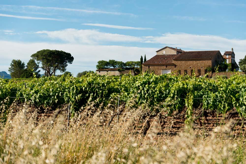Vignes et maison Toureveque