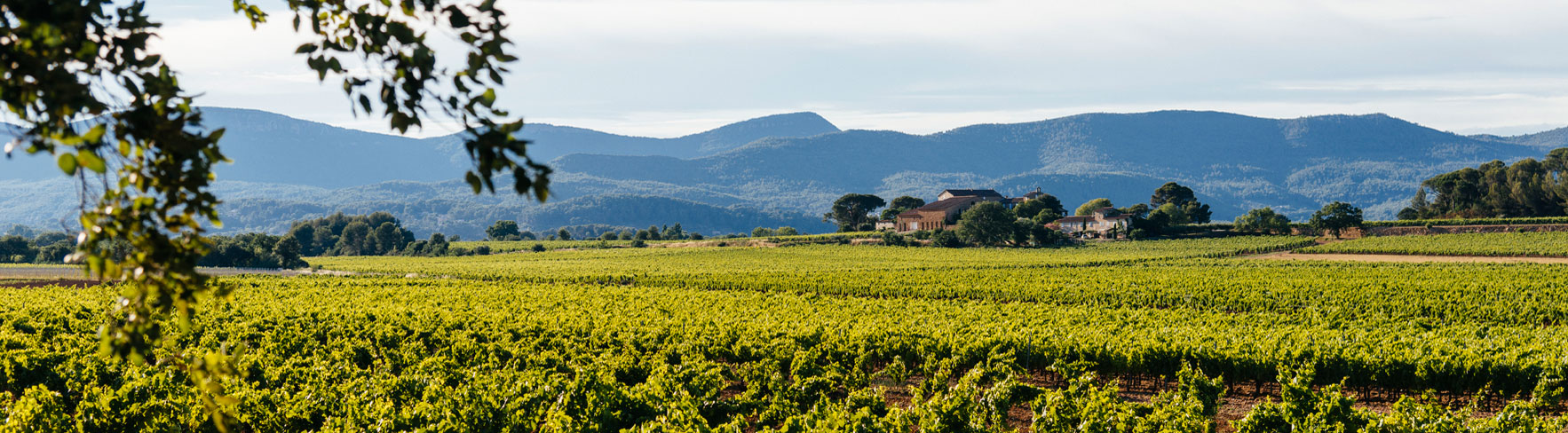A wineyard