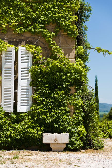 Maison domaine Vin Toureveque, house of barbeyrolles vineyard with green leaf on a moutain
